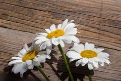 Λουλούδια Chamomile σε έναν ξύλινο Στοκ Εικόνα