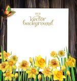 Λουλούδια Daffodils στο ξύλινο υπόβαθρο Στοκ εικόνα με δικαίωμα ελεύθερης χρήσης