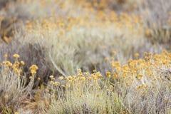 Λουλούδια Everlast Στοκ φωτογραφία με δικαίωμα ελεύθερης χρήσης