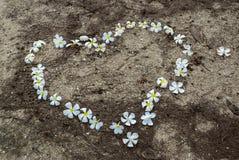 Λουλούδια Frangipani στο έδαφος Στοκ φωτογραφία με δικαίωμα ελεύθερης χρήσης