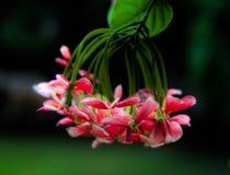 Λουλούδια Glowy στοκ εικόνες με δικαίωμα ελεύθερης χρήσης