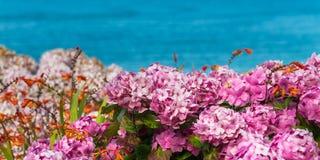 Λουλούδια Hydrangea στον κήπο Στοκ φωτογραφία με δικαίωμα ελεύθερης χρήσης