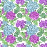 Λουλούδια Hydrangea στο άσπρο υπόβαθρο Floral σχέδιο για τα καλλυντικά, άρωμα, προϊόντα προσοχής ομορφιάς Στοκ Εικόνα