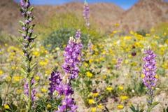 Λουλούδια Lupine  Τομέας των wildflowers στο υπόβαθρο, εθνικό πάρκο δέντρων του νότιου Joshua, Καλιφόρνια στοκ εικόνες