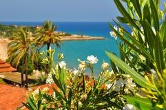 Λουλούδια Tarragona, Ισπανία στοκ εικόνες με δικαίωμα ελεύθερης χρήσης