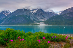 Λουλούδια Whild στο εθνικό πάρκο κόλπων παγετώνων, Αλάσκα Στοκ φωτογραφία με δικαίωμα ελεύθερης χρήσης