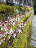 Λουλούδι άμεσα στοκ φωτογραφίες με δικαίωμα ελεύθερης χρήσης