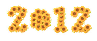 Λουλούδι ήλιων στην άσπρη ανασκόπηση 2012 στοκ φωτογραφίες