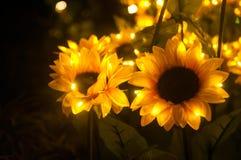 Λουλούδι ήλιων τη νύχτα Στοκ Εικόνες