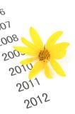 Λουλούδι αγκιναρών της Ιερουσαλήμ στοκ φωτογραφίες με δικαίωμα ελεύθερης χρήσης