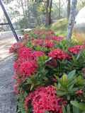 Λουλούδι ακίδων στοκ φωτογραφία