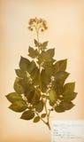 λουλούδι ανασκόπησης π&omic Στοκ φωτογραφία με δικαίωμα ελεύθερης χρήσης