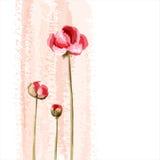 λουλούδι ανασκόπησης ρ&omi Στοκ εικόνα με δικαίωμα ελεύθερης χρήσης