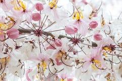 λουλούδι ανασκόπησης φ&ups Καταπληκτική άποψη φύσης της άνθισης λουλουδιών Στοκ εικόνα με δικαίωμα ελεύθερης χρήσης