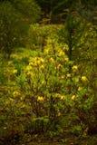 λουλούδι ανασκόπησης φ&ups Καταπληκτική άποψη φύσης του θάμνου των λουλουδιών άνοιξη στον κήπο Στοκ εικόνα με δικαίωμα ελεύθερης χρήσης