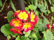 λουλούδι ανθοδεσμών μι&k Στοκ φωτογραφίες με δικαίωμα ελεύθερης χρήσης