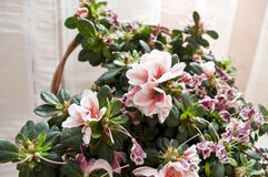 λουλούδι ανθοδεσμών στοκ εικόνες με δικαίωμα ελεύθερης χρήσης