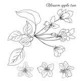 Λουλούδι ανθών δέντρων της Apple, sakura κλάδων, floral επικεφαλής διανυσματικός βοτανικός Στοκ φωτογραφία με δικαίωμα ελεύθερης χρήσης