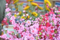 Λουλούδι ανθών ροδάκινων Στοκ φωτογραφίες με δικαίωμα ελεύθερης χρήσης