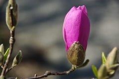 λουλούδι ανθών στοκ φωτογραφία με δικαίωμα ελεύθερης χρήσης