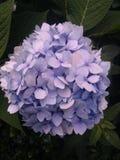 λουλούδι αρκετά Στοκ Εικόνα