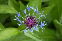 λουλούδι ασυνήθιστο Στοκ Φωτογραφίες