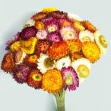 Λουλούδι αχύρου Στοκ εικόνες με δικαίωμα ελεύθερης χρήσης