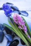 Λουλούδι & βράχοι Στοκ Φωτογραφίες