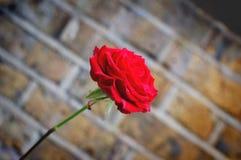 λουλούδι βρώμικο Στοκ φωτογραφία με δικαίωμα ελεύθερης χρήσης