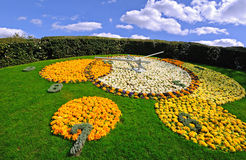 λουλούδι Γενεύη ρολο&gamm Στοκ Εικόνα
