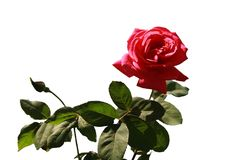 Λουλούδι για τη μόδα σχεδίου, άλλα meterials Στοκ Εικόνα