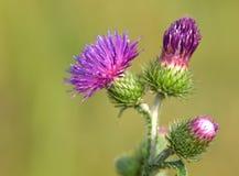 λουλούδι γραφείου ακ&alp Στοκ Φωτογραφίες
