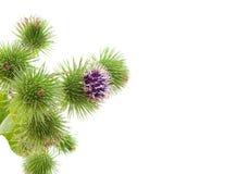 λουλούδι γραφείου ακ&alp Στοκ φωτογραφία με δικαίωμα ελεύθερης χρήσης