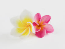 Λουλούδι δύο Στοκ Εικόνες