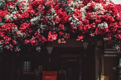 Λουλούδι εγγράφου ομορφιάς στο Βιετνάμ στοκ εικόνες