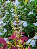 Λουλούδι εγκαταστάσεων στοκ φωτογραφία