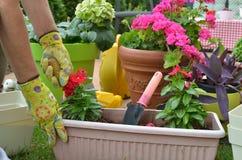 Λουλούδι επαν-potting γυναικών Στοκ εικόνες με δικαίωμα ελεύθερης χρήσης