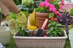Λουλούδι επαν-potting γυναικών Στοκ εικόνα με δικαίωμα ελεύθερης χρήσης