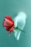λουλούδι εσείς Στοκ φωτογραφία με δικαίωμα ελεύθερης χρήσης