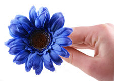 λουλούδι εσείς Στοκ Εικόνες