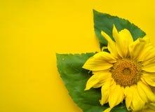 Λουλούδι ηλίανθων σε ένα κίτρινο υπόβαθρο στοκ φωτογραφία με δικαίωμα ελεύθερης χρήσης