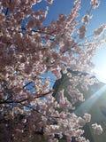 Λουλούδι κάτω από τον ήλιο στοκ εικόνες με δικαίωμα ελεύθερης χρήσης