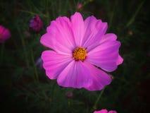 Λουλούδι κάτω από το φως του ήλιου βραδιού Στοκ φωτογραφία με δικαίωμα ελεύθερης χρήσης