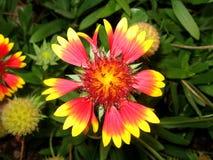 Λουλούδι κήπων στοκ φωτογραφίες με δικαίωμα ελεύθερης χρήσης