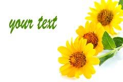 λουλούδι κίτρινο Στοκ Εικόνες
