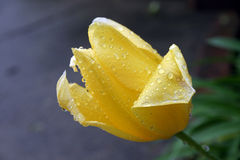 λουλούδι κίτρινο Στοκ Φωτογραφίες