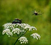 Λουλούδι και έντομα στοκ φωτογραφία