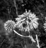 Λουλούδι και κάνθαρος στοκ εικόνες με δικαίωμα ελεύθερης χρήσης