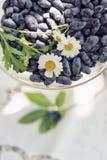 Λουλούδι και μούρα στον κήπο Στοκ Εικόνες