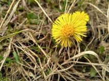λουλούδι και ξηρό χορτάρι στοκ εικόνα με δικαίωμα ελεύθερης χρήσης